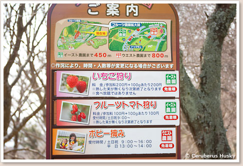 フルーツ農園の看板
