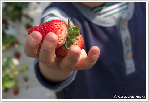 面白い形のイチゴ