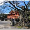 千葉神社に御札を納めに行ってみよう